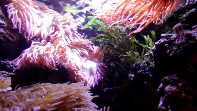 colorful fish swiming
