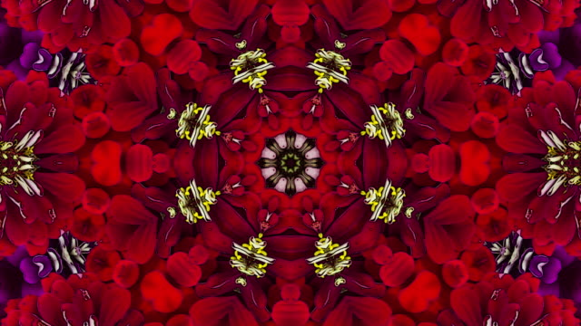 colorful floral background - kaleidoscope pattern stock videos & royalty-free footage