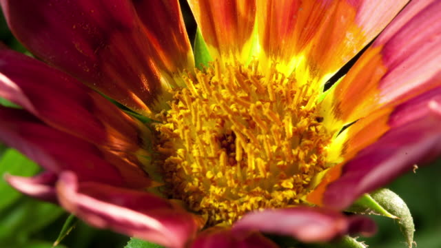 Colorful Flower Blooming Time-Lapse in Studio City