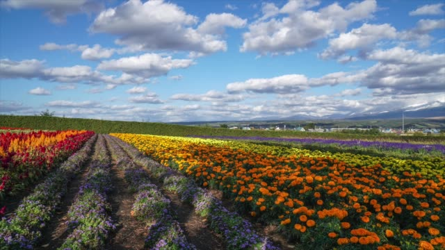 colorful flower field - meadow stock videos & royalty-free footage