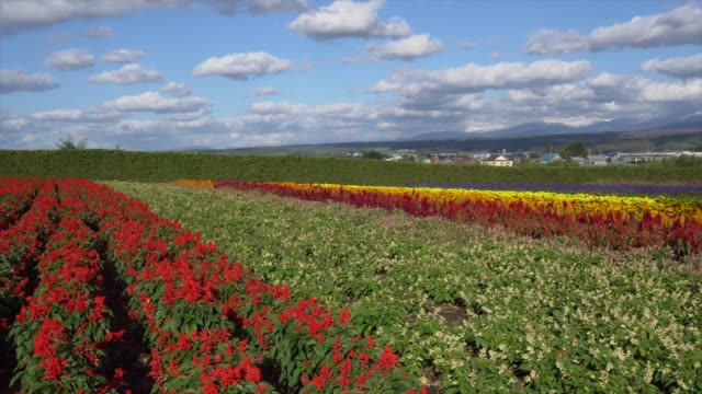 colorful flower field - satoyama scenery stock videos & royalty-free footage