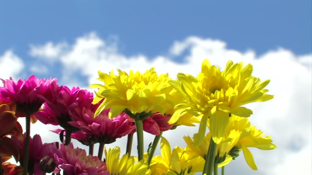 Colorful flowers in sunshine and passing clouds