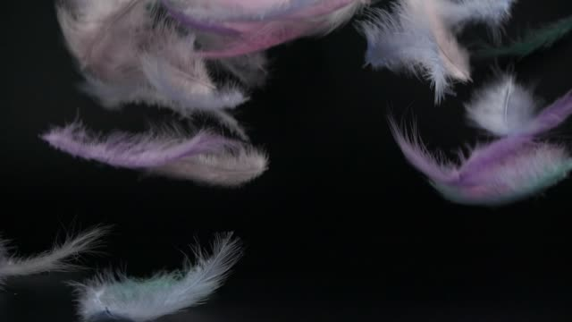 colorful fluffy feathers falling down on black background - hovering stock videos & royalty-free footage