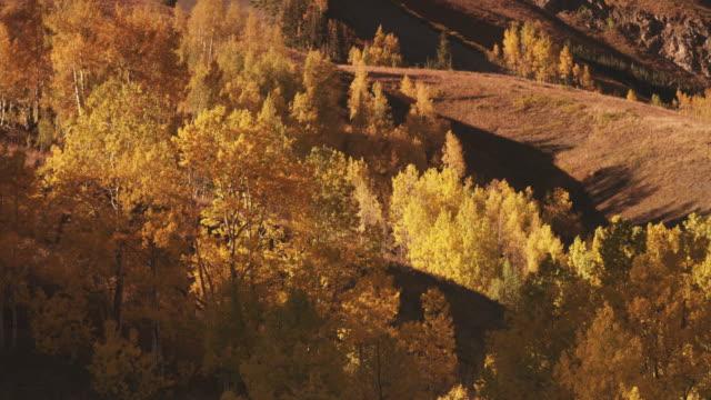 stockvideo's en b-roll-footage met colorful forest on hillside, utah - westelijke verenigde staten