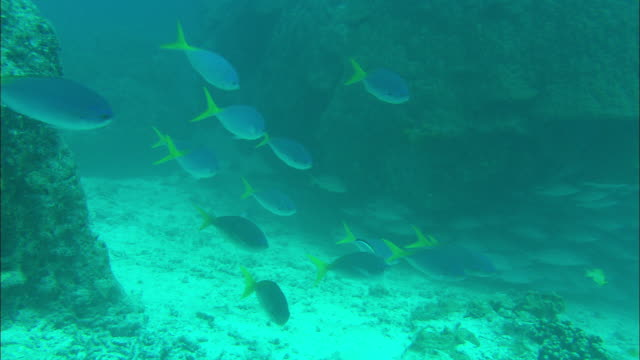 colorful fusilier fishes swim near a sandy ocean floor. - ocean floor stock videos & royalty-free footage