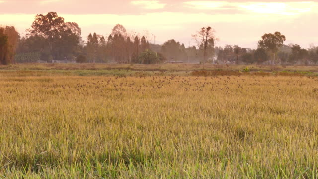 colorful golden rice - digital enhancement stock videos & royalty-free footage