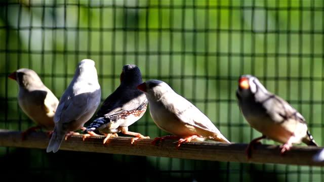 colorato gruppo di uccelli che volano in una gabbia - gabbia per gli uccelli video stock e b–roll