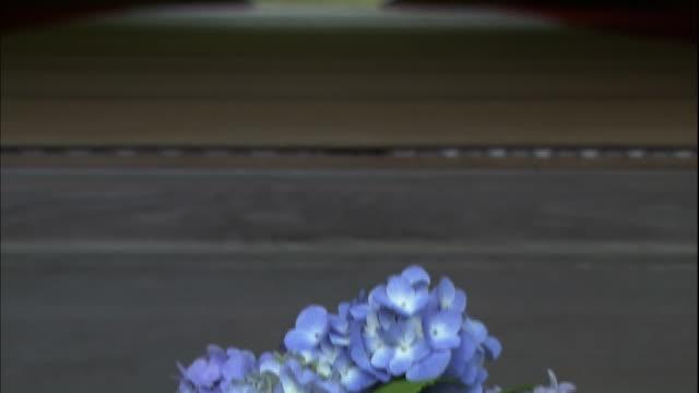 vídeos y material grabado en eventos de stock de colorful hydrangea macrophylla flowers, a round window facing the garden. - hortensia