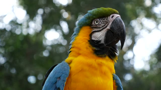 vídeos de stock, filmes e b-roll de pássaro-arara colorido sobre a natureza - floresta tropical