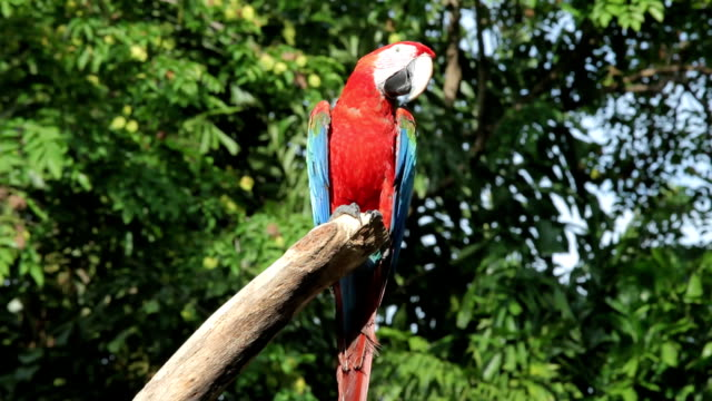 colorful macaw - parrot stock videos & royalty-free footage