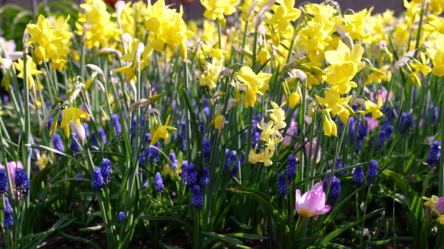 colorful mixed spring border - flower head stock videos & royalty-free footage
