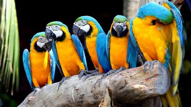 コンゴウインコ鳥のカラフルです - 動物園点の映像素材/bロール
