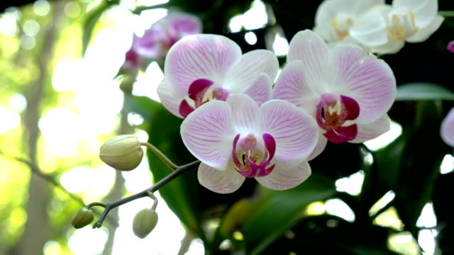 colorful orchid flower in garden - orchid stock videos & royalty-free footage