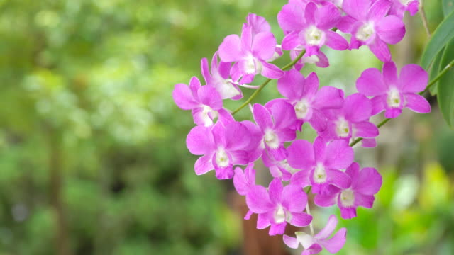 Colorful Orchid Flower in Thailand