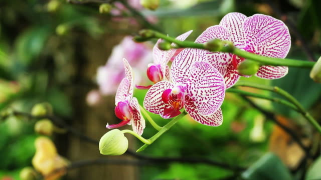 colorful orchid flower - orchid stock videos and b-roll footage