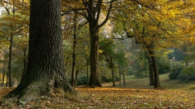 vídeos y material grabado en eventos de stock de colorful park in autumn - tope de los árboles