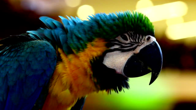 colorful parrot macaw - parrot stock videos & royalty-free footage
