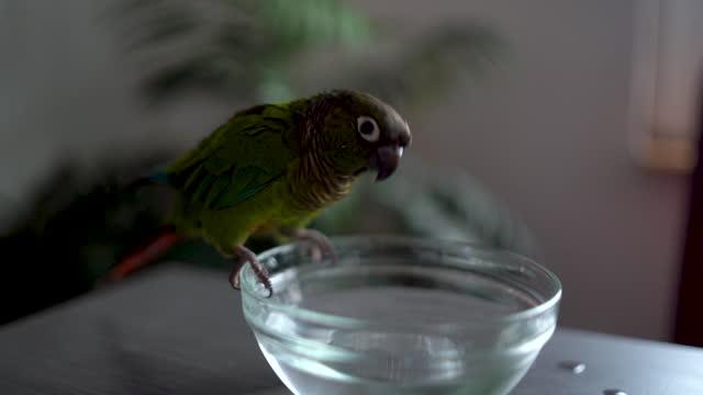 vídeos de stock, filmes e b-roll de papagaio colorido sentado espirrando para a água - molhado