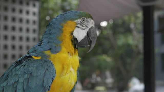 a colorful parrot turns its head - zoo stock videos & royalty-free footage