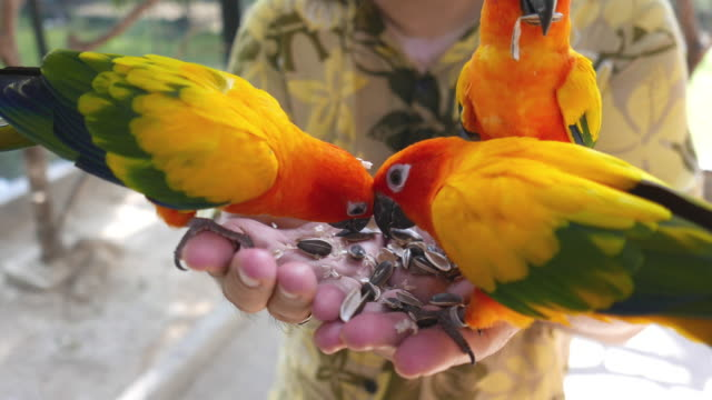 Colorful parrots birds eat from the hand