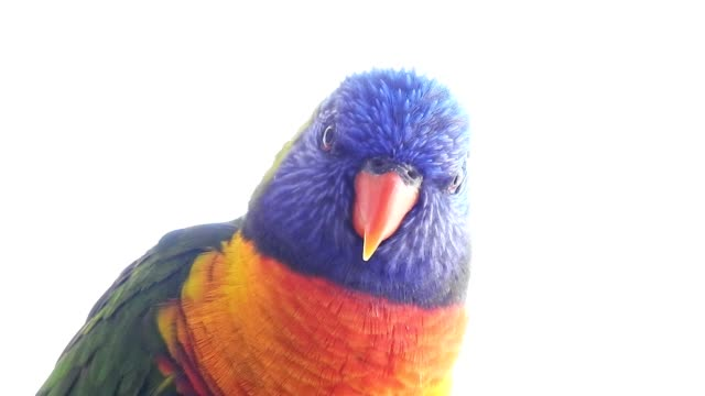 colorful parrots preening - maul stock-videos und b-roll-filmmaterial