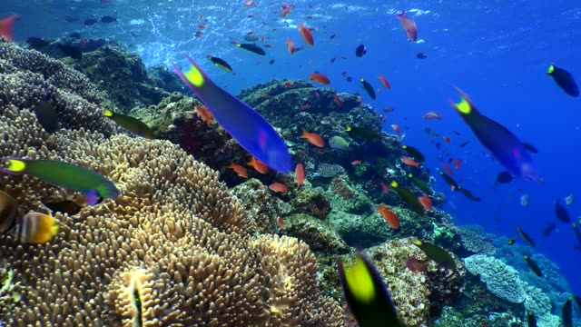 vídeos de stock, filmes e b-roll de colorful reef and many barrier reef fishes - peixe