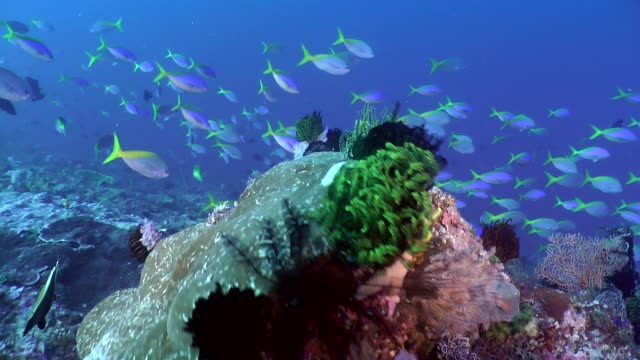 colorful reef and many barrier reef fishes