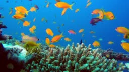 Colorful Reef Marine Life