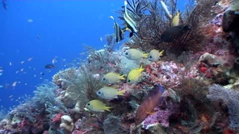 vídeos de stock e filmes b-roll de recife colorido cena a fervilhar de vida 1 - coral macio
