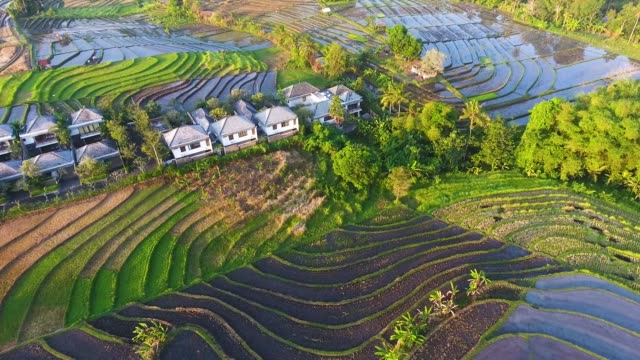 colorful rice terraces aerial view - ubud stock videos & royalty-free footage