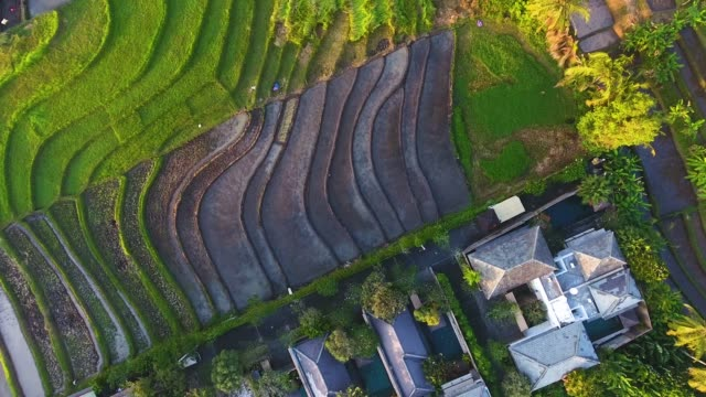 Colorful Rice terraces aerial view