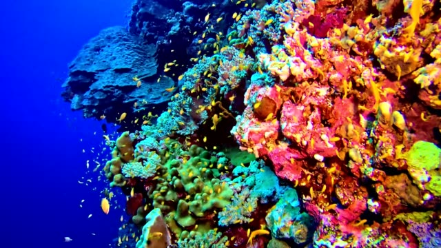 colorful sea bottom. underwater scenery - ultra high definition television stock videos & royalty-free footage