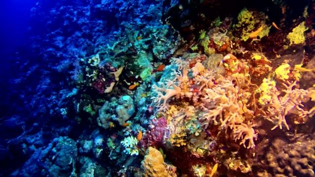 カラフルな海底。水中風景 - 刺胞動物 サンゴ点の映像素材/bロール