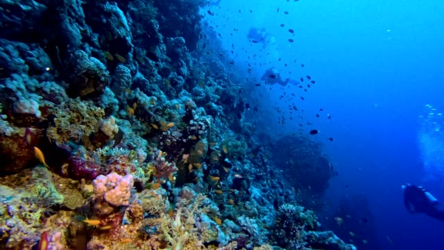 colorful sea bottom. underwater scenery - reef stock videos & royalty-free footage