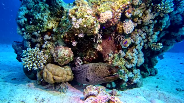 colorful sea bottom. underwater scenery - undersea stock videos & royalty-free footage