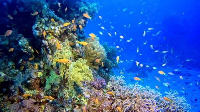 colorful sea bottom. underwater scenery - saltwater fish stock videos & royalty-free footage