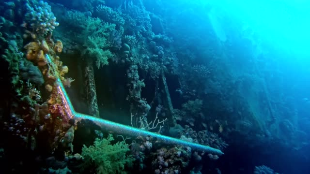 colorful sea bottom with old wreck. underwater scenery - invertebrate stock videos & royalty-free footage