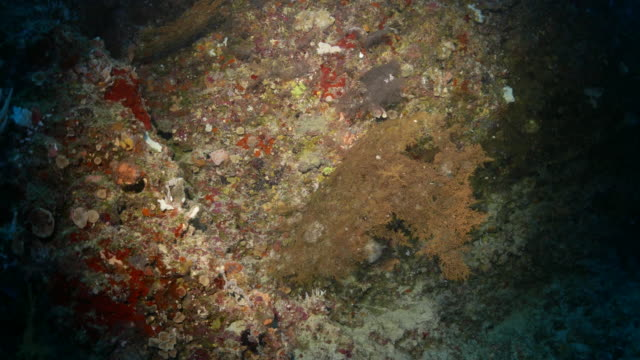 Colorful sea fan coral in dark hole underwater