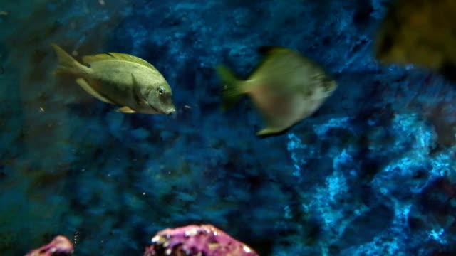 Colorful sea fish swimming