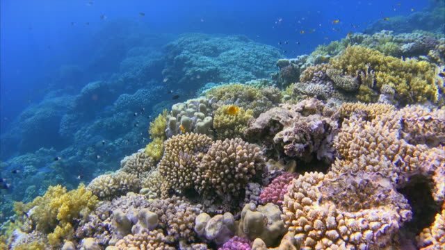 Colorful sea life reef with lot of fisch on Red Sea / Egypt