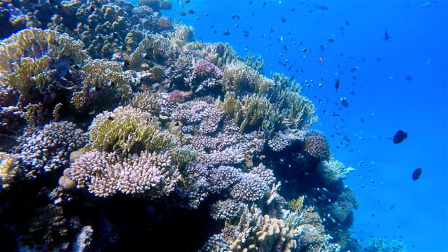 Colorful Sea Life reef with lot of fisch on Red Sea