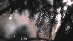 Colorful smoke moving through fir tree branches in morning sunlight in slow motion.