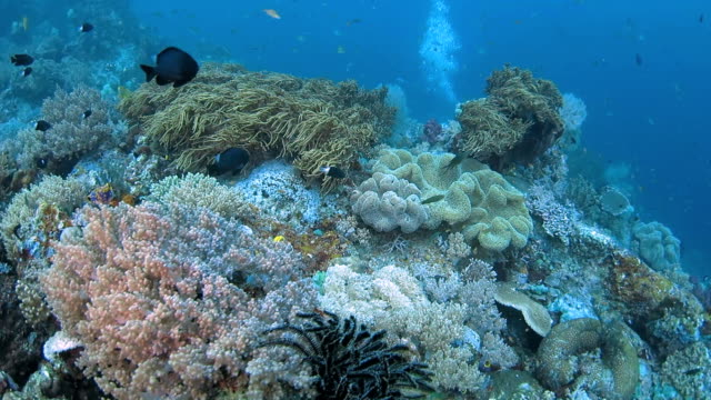 colorful soft coral in reef of tropical sea, indonesia - soft coral stock videos & royalty-free footage