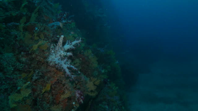colorful soft coral in reef - soft coral stock videos & royalty-free footage