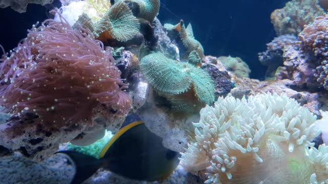stockvideo's en b-roll-footage met kleurrijke zachte koraal in zeewater, phuket, thailand - andamanse zee