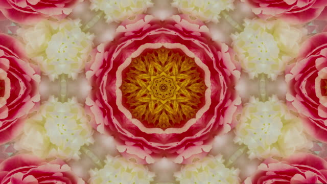 colorful spinning floral mandala background - petal stock videos & royalty-free footage
