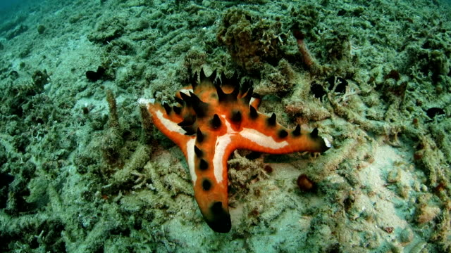 Colorful starfish lies on the ground underwater