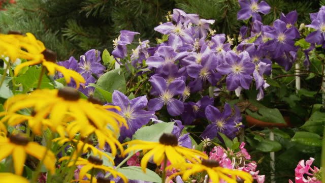 HD DOLLY: Colorful Temperate Flowers
