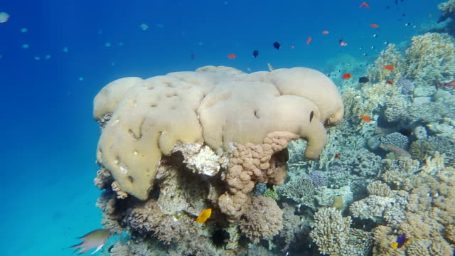 colorful tropical fish and coral reef on gulf of aqaba - gulf of aqaba stock videos & royalty-free footage