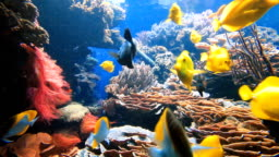 Colorful tropical fish on coral reef